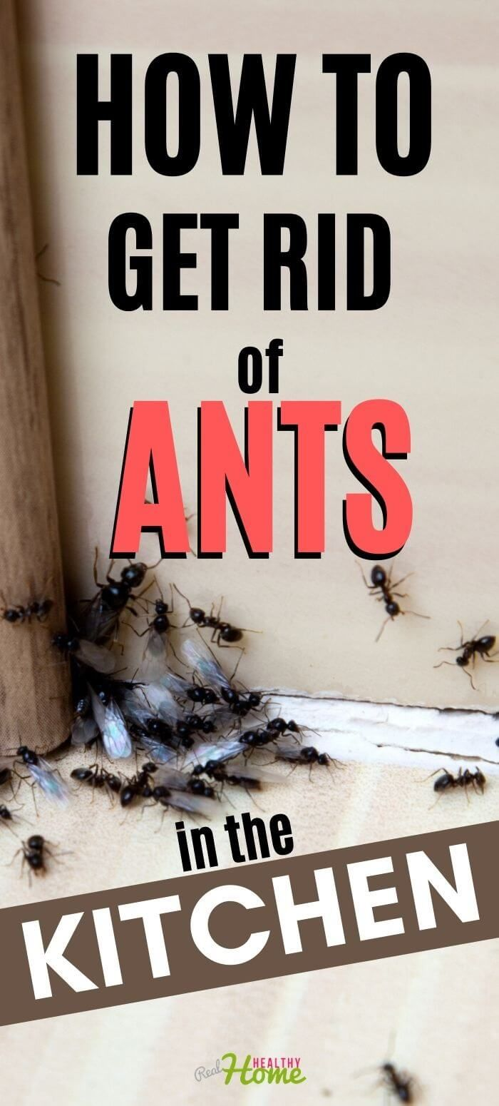 How To Get Rid Of Ants In The Kitchen My Experience Rid Of Ants Get Rid Of Ants Ants In House