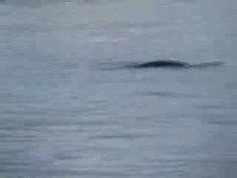 Loch Ness Monster Spotted Could This Be The Elusive Nessie