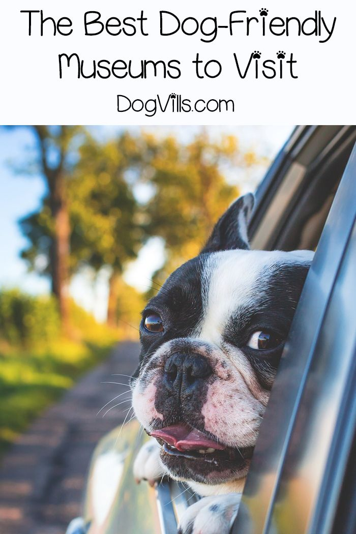 9 Dog Friendly Museums You Have To Visit Dogvills Dog Friends Pet Travel Dog Adventure