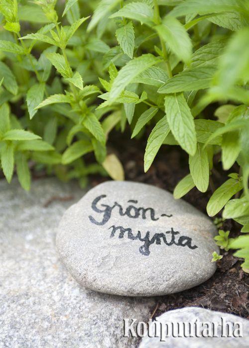 Puutarhan luonnolliseen ilmeeseen istuvat nimikivet helpottavat kasvien tunnistamista. Tämä on hyvä vinkki etenkin jos avaat puutarhasi Puutarhaliiton joka vuotisessa Avoimetpuutarhat-tapahtumassa! www.kotipuutarha.fi
