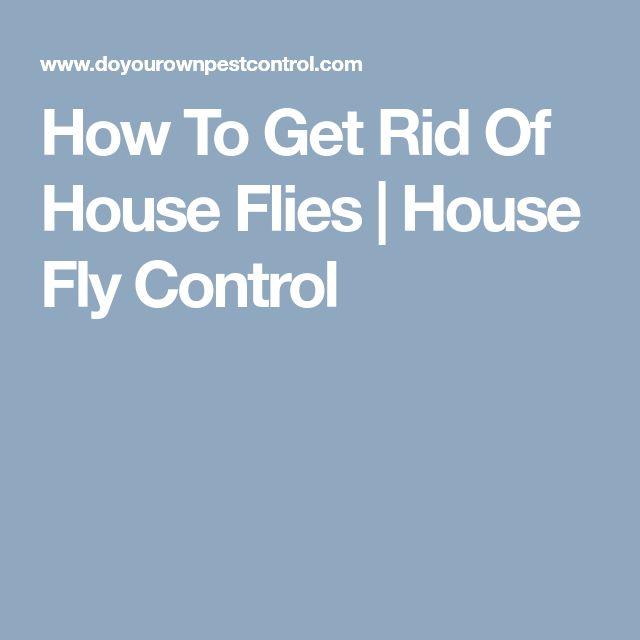 How To Get Rid Of House Flies | House Fly Control