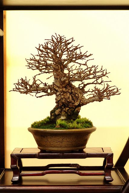 Exhibition Stand Tree : Best ideas about bonsai display stands on pinterest