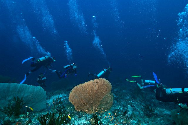 LOL, tho with so many divers, it doesn't look v untouched ;p But seriously divesites are rarely crowded here... unless it's people from your own dive party! Weh Island: Diving the Untouched Edge