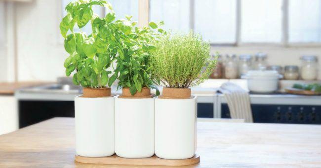 un potager d int rieur autonome aromates top fete des. Black Bedroom Furniture Sets. Home Design Ideas