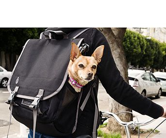 7 best images about Dogs in backpacks on Pinterest | Camo backpack ...