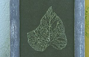 Diy - Eco création: recette pour squelettiser des feuilles d'arbres / recipe for skeletonized leaves of trees