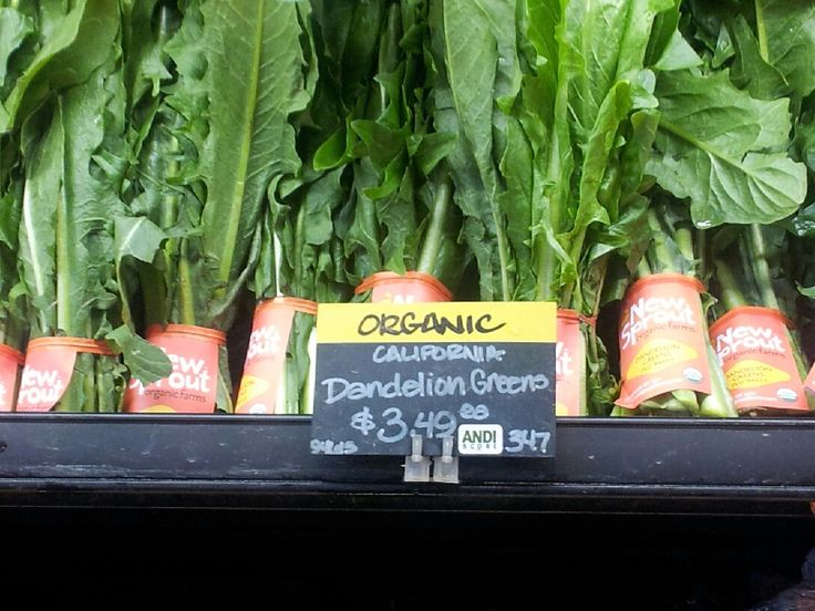 Southern Forager: Dandelion recipes  ........... ♥  made the dandelion jelly - delicious & love it !!! ♥
