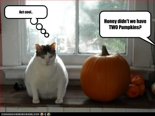 this is the funniest cat joke ever - Funny Cat Halloween