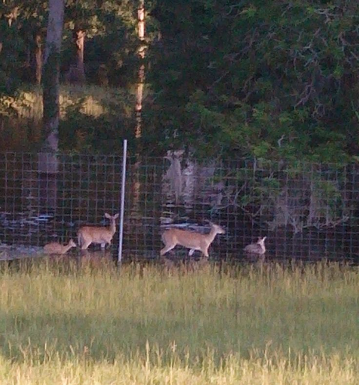 Louisiana Deer Map%0A UPDATE  Deer at Flooded Game Ranch Now on Dry Land