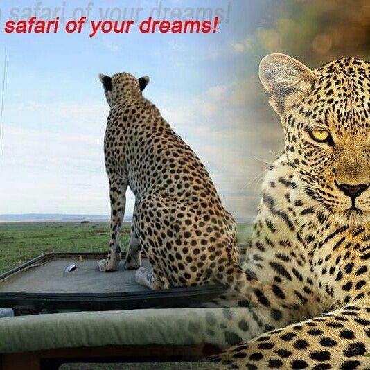 Enjoy friendship in the Wild
