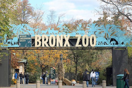 An http://www.gogelautosales.com Repin Amazing Used Cars from wonderful people. Rt 10, East Hanover.    Bronx Zoo- My First Job!