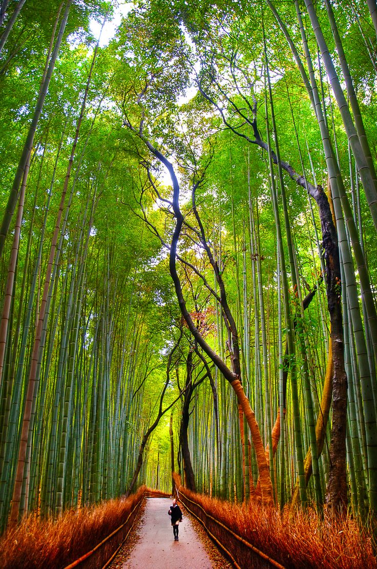 Arashiyama Bamboo forest, Kyoto, Japan. Travel photography