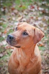 READ THIS STORY!!! Bunny is an adoptable Labrador Retriever Dog in Charlotte, NC. Owner was homeless! My owner lost his house and was living in a cheap motel. The management found out about me and said I had to go immed...