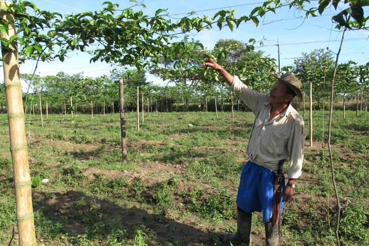 Logros del plan de manejo de cultivos de maracuyá y guayaba
