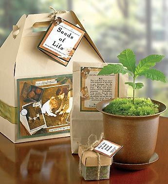 seeds of life tree kit, a thoughtful and unique way to remember a beloved friend or family member.
