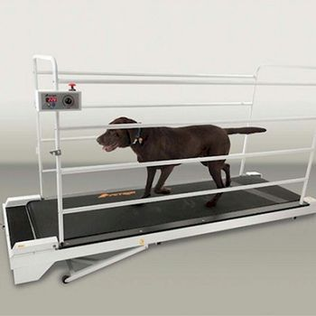 GoPet Petrun PR730 Foldable Dog Treadmill Indoor Exercise / Fitness Kit - For Dogs Upto 44 Pounds