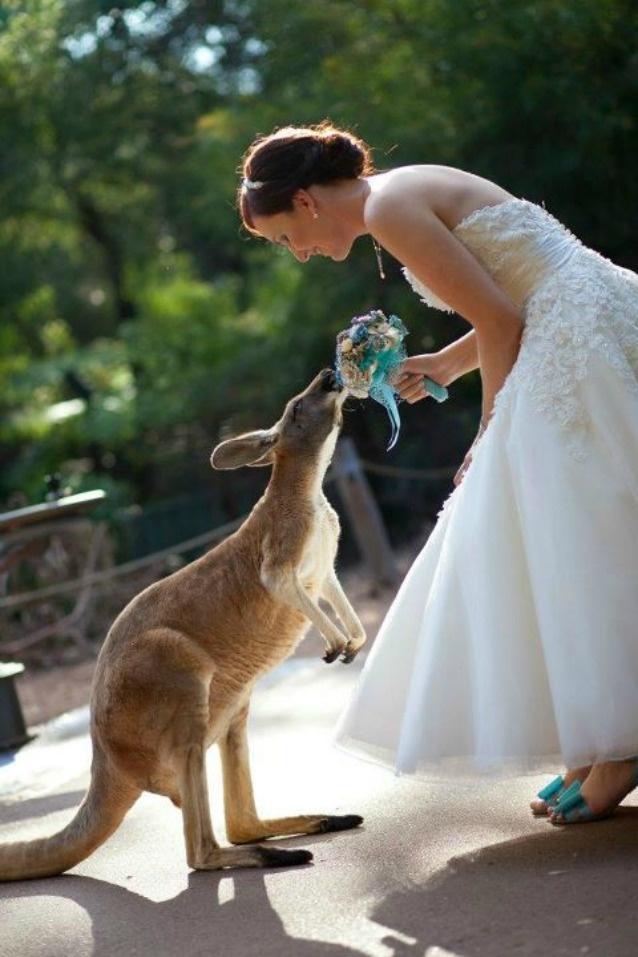 Kanagaroo Zoo Weddings wildlife weddings perth weddings