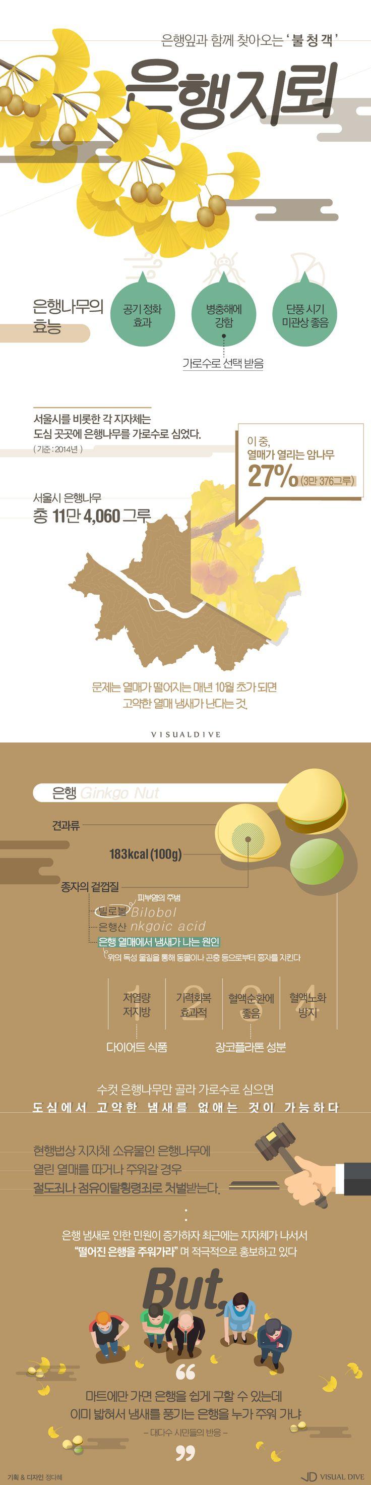 단풍 오는 곳에 악취도 있다? 가을불청객 '은행지뢰' [인포그래픽] #ginkgo / #Infographic ⓒ 비주얼다이브 무단 복사·전재·재배포 금지