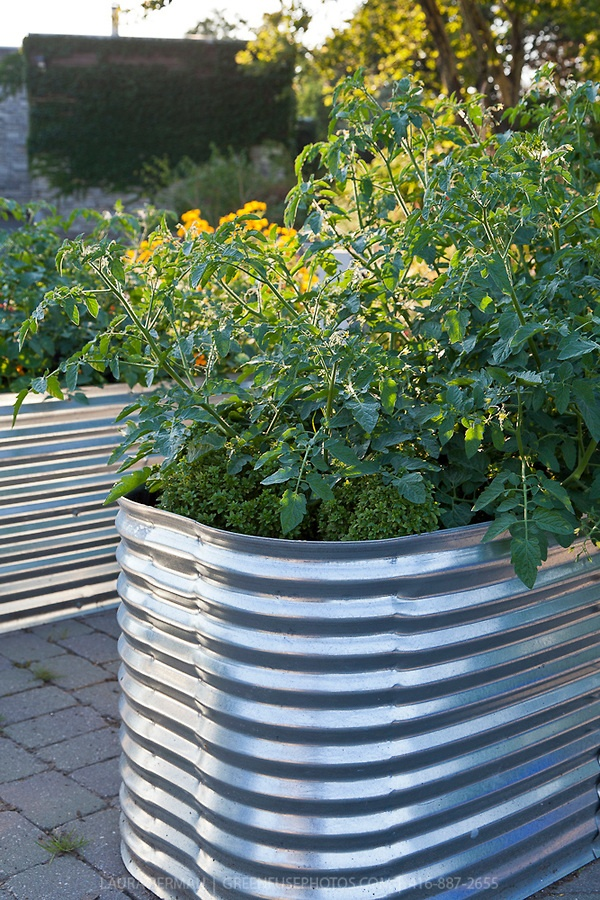 Pin by catherine boldt on galvanized garden pinterest - Galvanized containers for gardening ...