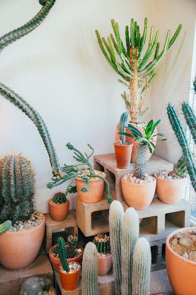 cacti forever