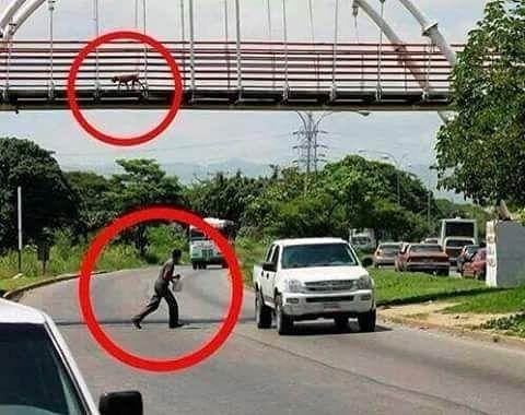 Hay de inteligencias �� a inteligencias �� ..... Feliz dia del animal. ¡¡Buenas noches!! ���� #29deAbrilDiaDelAnimal #ElHombreVsElPerro  #Hombre #Perro #Puente #CruzandoDeUnLadoAlOtro #Calle #Inteligencia #Autos http://unirazzi.com/ipost/1504070647737840614/?code=BTfiEkDgXPm