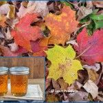 How to Make Maple Syrup I: Choosing Trees and Getting Sap
