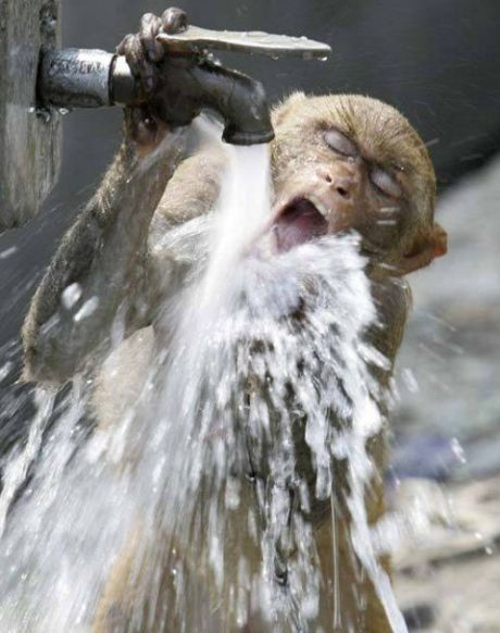 rubinetto-e-scimmia, Immagini Divertenti