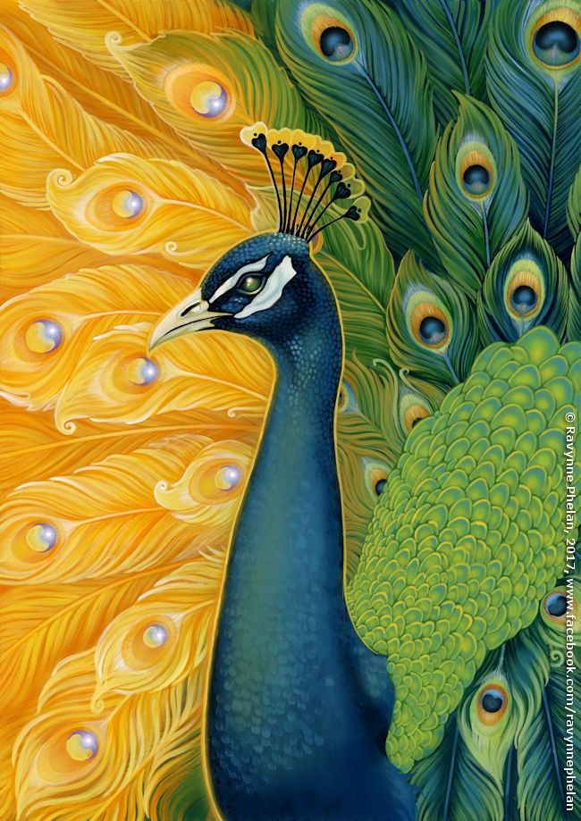 Beautiful Peacock artwork by Ravynne Phelan