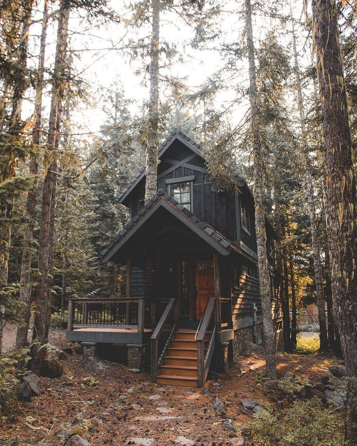 Cabin Vibes ↟