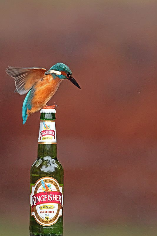 Kingfisher's beer (2) by Marc Costermans on 500px