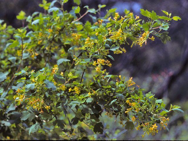 105 best iowa native plants images on pinterest