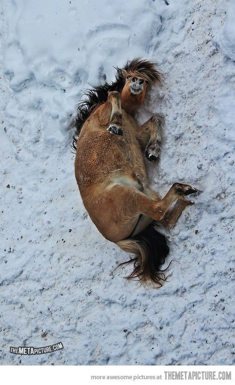 Rolling in the snow… | animals | Horses, Beautiful horses ...