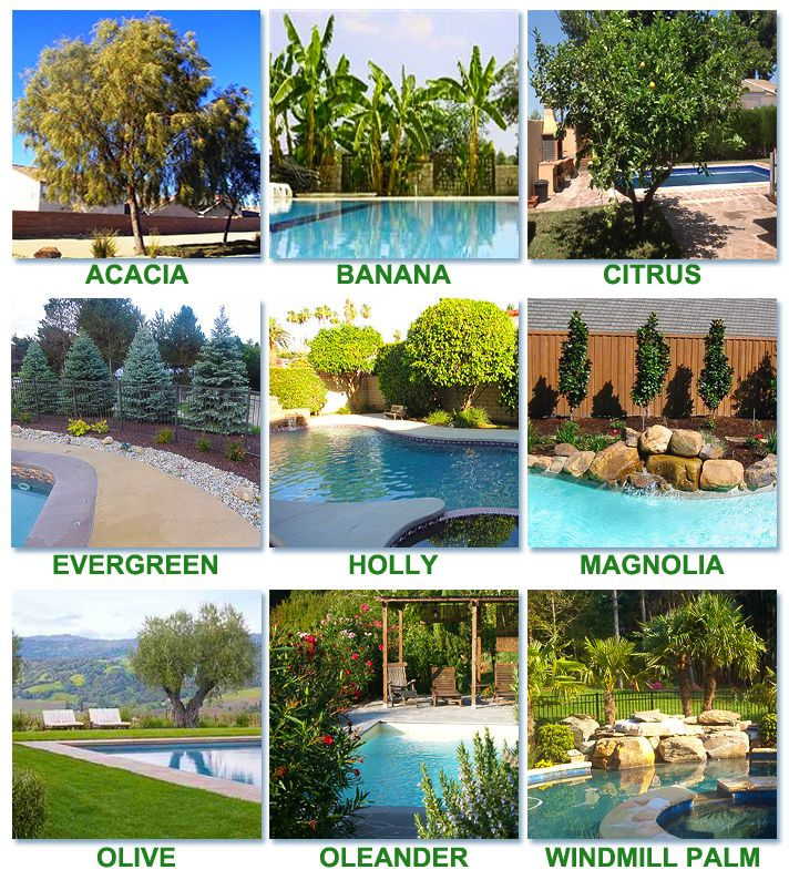 best worst trees to plant around a pool swimming pool owners blog - Garden Ideas Around Swimming Pools