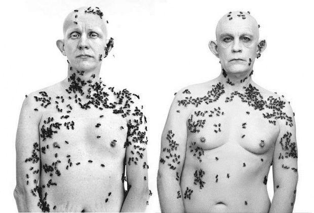 Richard Avedon: Ronald Fischer, Beekeeper, Davis