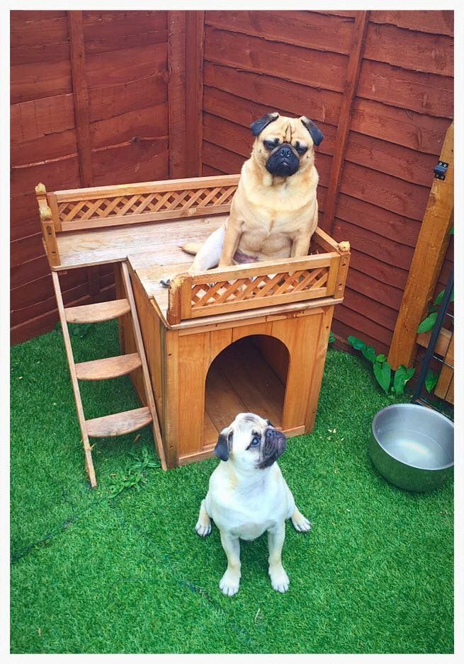 Http Doggroomingwestonsupermare Co Uk 01934613806 Handsome Hounds Professional Dog Grooming Salon Dog Grooming Hound