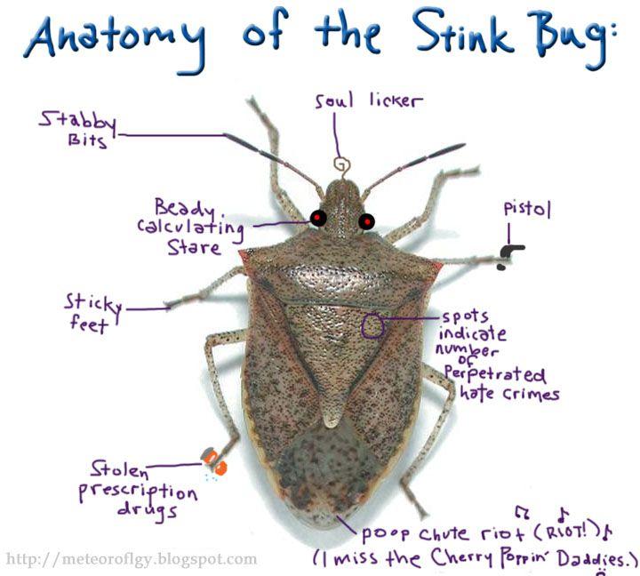 The Anatomy Of The Stink Bug   Stinkbugs  Pestcontrol  Bugs
