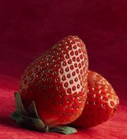 A thorough article on the science, history & health benefits of strawberries, as well as how to care for the plants in your own garden.
