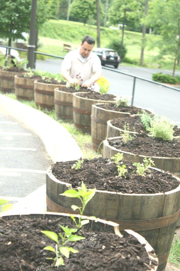7 Elegant Ideas Vegetable Garden Fence Ideas Indoor Vegetable