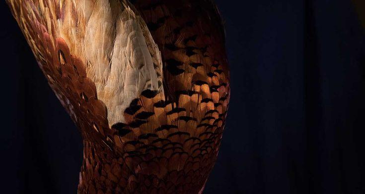 Karnawałowe piersi