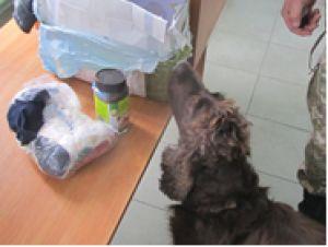 """(ВІДЕО) У рейсовому автобусі, що прямував до Молдови, прикордонники виявили канабіс та амфетамін http://dpsu.gov.ua/ua/news/u-reysovomu-avtobusi-shcho-pryamuvav-do-moldovi-prikordonniki-viyavili-kanabis-ta-amfetamin  Службовий собака, натренований на пошук наркотиків, спрацював учора у пункті пропуску  """"Табаки"""", що на державному кордоні з Молдовою."""