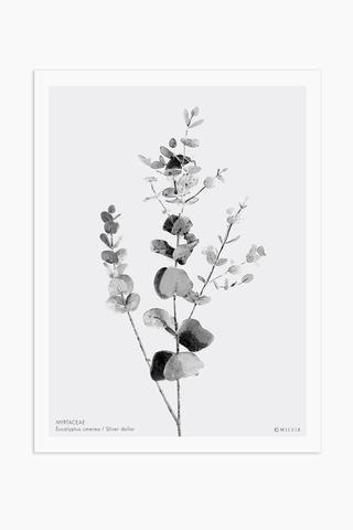 Art Print - Eucalyptus Cinerea