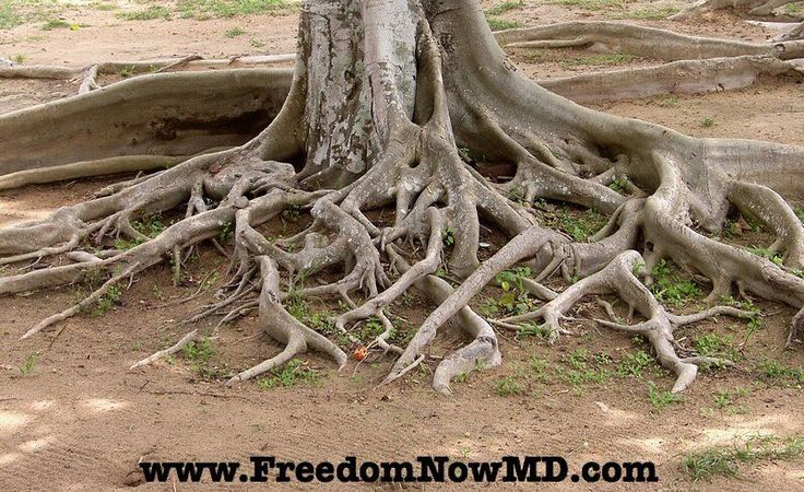 Roots - trees have them. Plants have them. Weeds have them.  In the case of weeds if you want to get rid of the weed permanently you have to pull the weed out by the roots. If you just cut off the stem and leave the roots in the ground then the weed will grow back.  It's the same with medical problems.  They have root causes...the problem that's at the foundation of what's causing the illness.  For example if you have a pneumonia the root cause of the problem may be a bacterial infection. If…