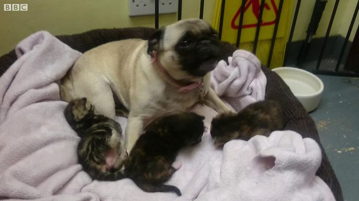 Kittens which were found abandoned in a London stairwell are being looked after by a dog.