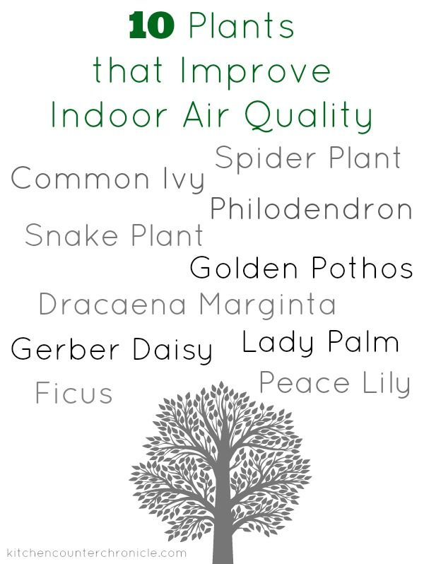 27 best the bad images on pinterest healthy eating for Best plants to improve air quality