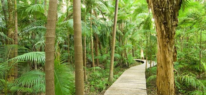 Rainforest Walk - The Byron at Byron Resort and Spa, Australia