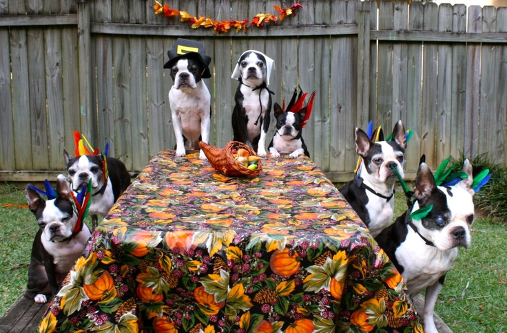 A Boston Thanksgiving!  Who brought the turkey?