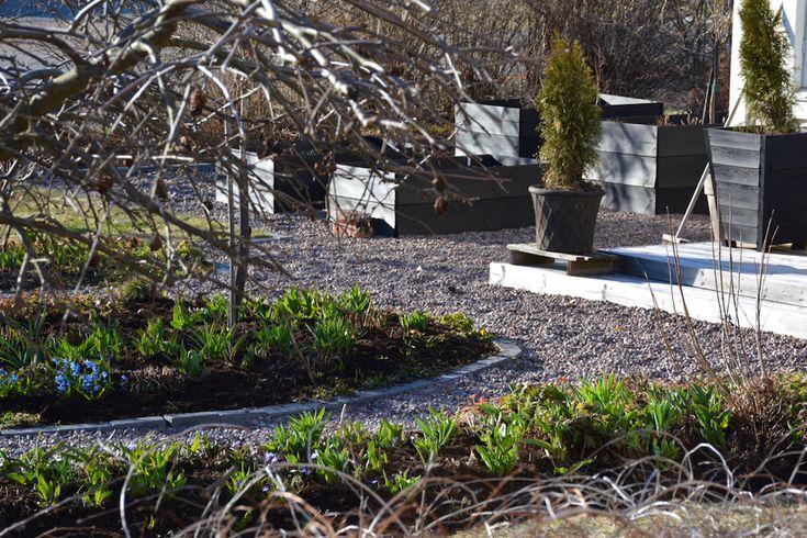 Minttua ja mustikoita / Kevätpuutarha