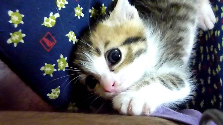 子猫 うり坊成長記録_02_一週間後の翌日