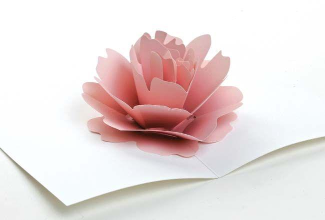 Carte pop-up fleur, la rose s'ouvre à l'ouverture, carte en volume fleur, sac