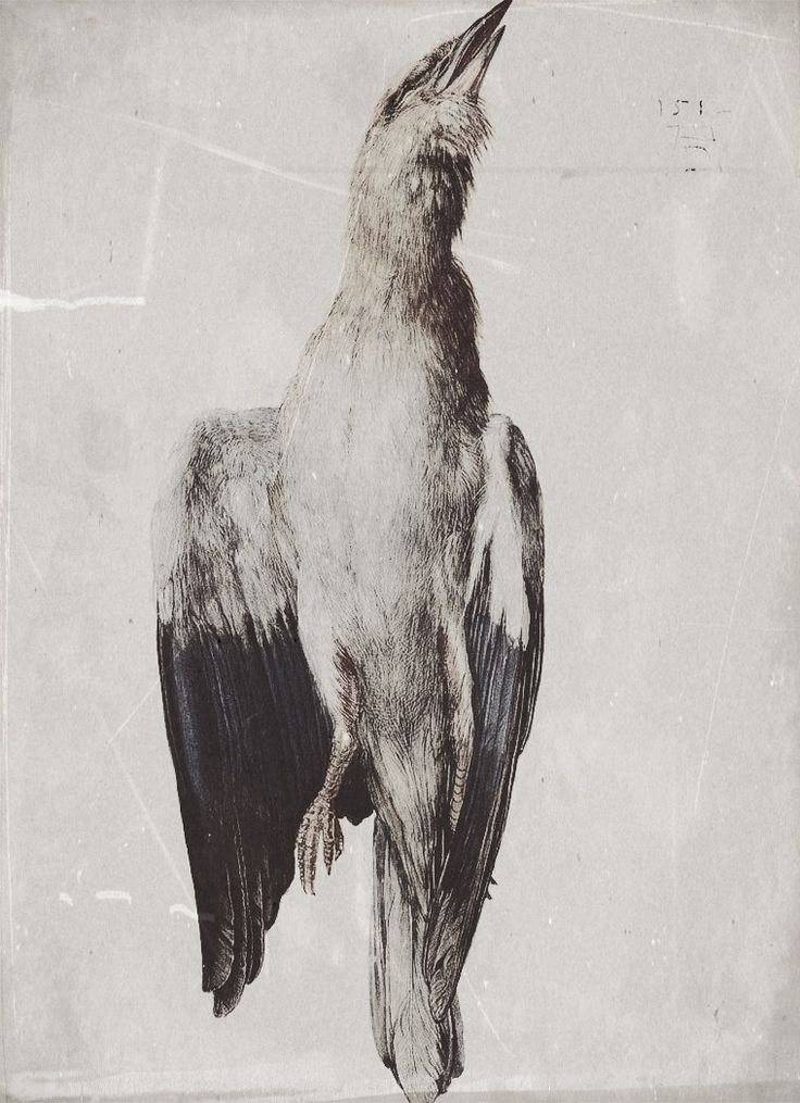 58 Best Dead Things Images On Pinterest Taxidermy Birds And Artists